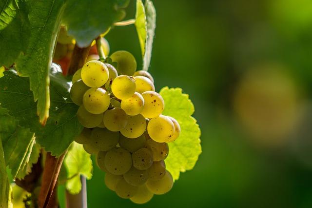 wine-berries